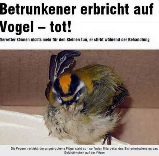 netzologe_picdump_freitag (37)